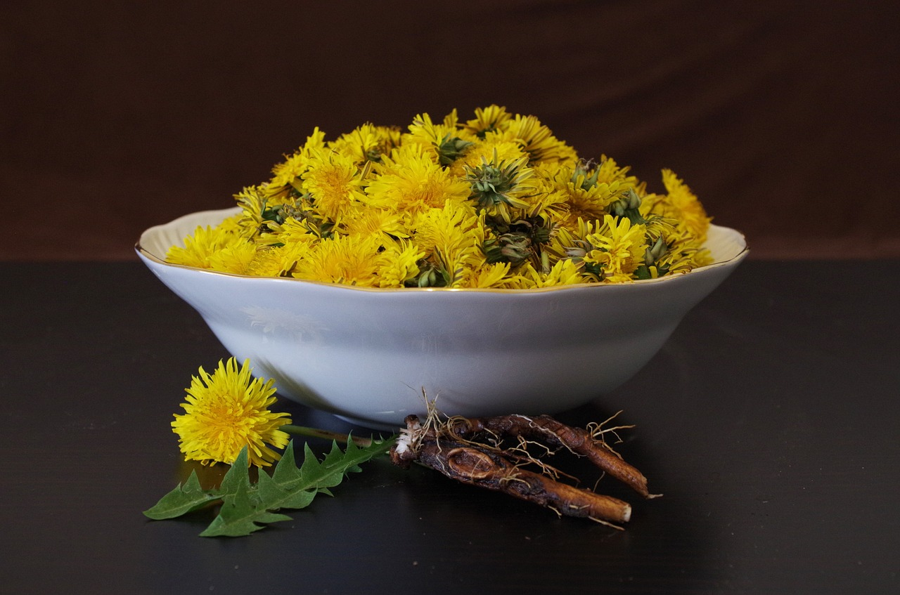 Dandelion root and flowers