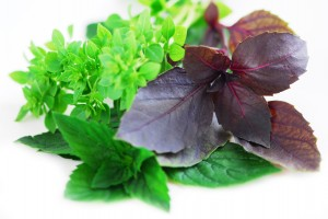 Assorted basil herbs