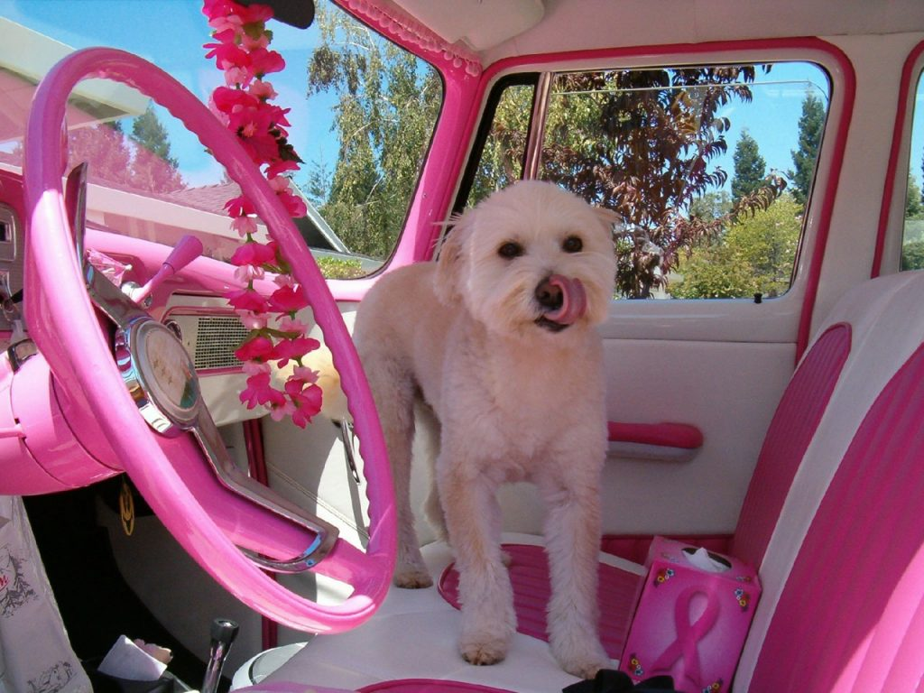 dog in pink car breast cancer