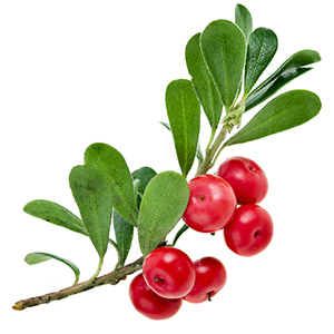 Bearberry Extract in Total Curve