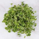Watercress Leaves in TotalCurve